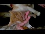 Мои соседи кормят моего кота,тортом)))